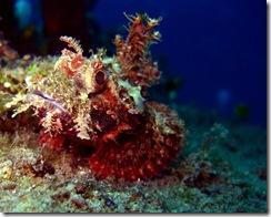 18 Scorpionfish
