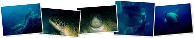 View mating turtles