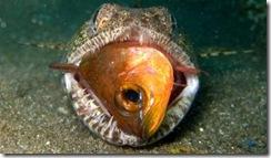 lizardfish 2